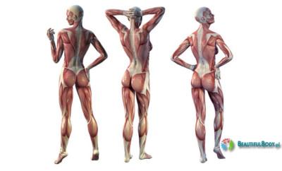 anatomia pośladków