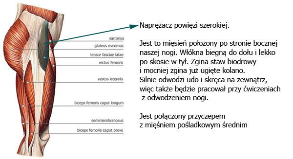 naprezacz_powiezi_szerokiej