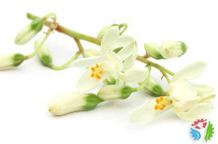 moginga kwiaty
